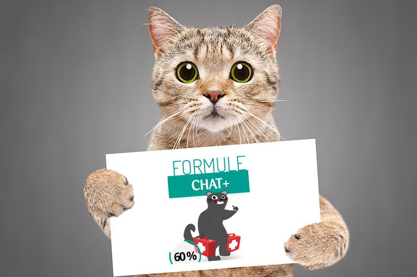 Assur O'Poil Tarif Chat Plus : Que rembourse la formule chat +