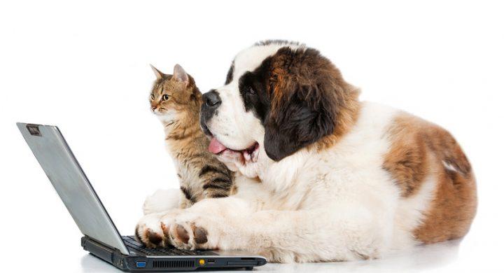Assur O'Poil met à votre disposition un service de tchat en ligne_assurance chiens_assurance chat_tchat assur o'poil