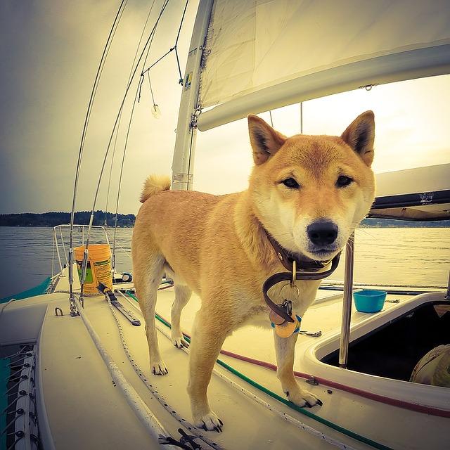Astuces chien : Les 8 indispensables à mettre dans la trousse de secours pour chien