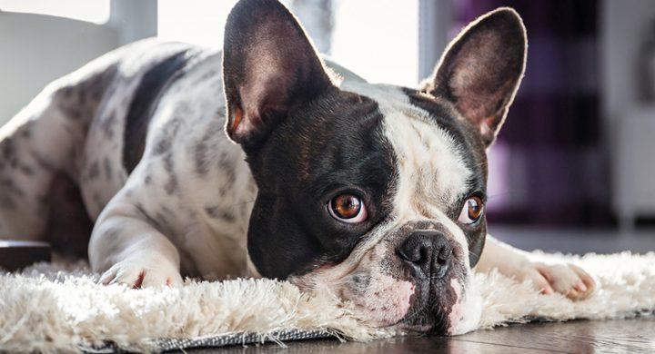 Astuces chien : Comment occuper son chien pendant son absence, jeux d'occupation