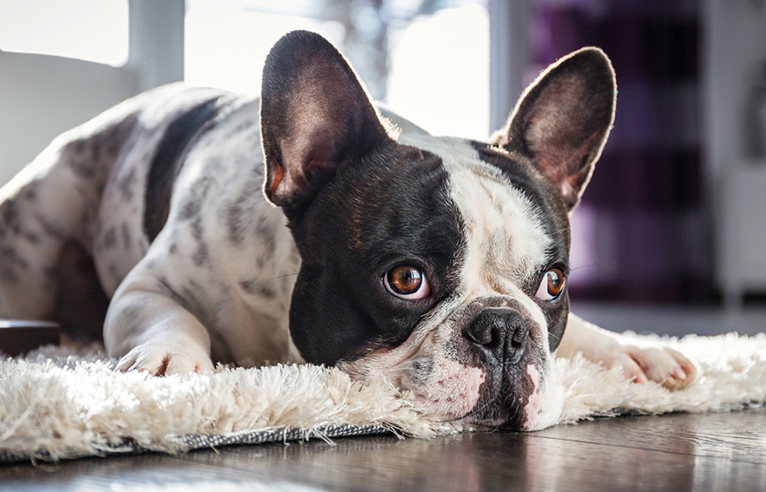 Occuper son chien 4 astuces pour combler sa solitude - Jeux de chiens a s occuper ...
