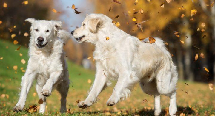 Automne : Comment bien aborder la santé de chat et chien pendant cette saison ?