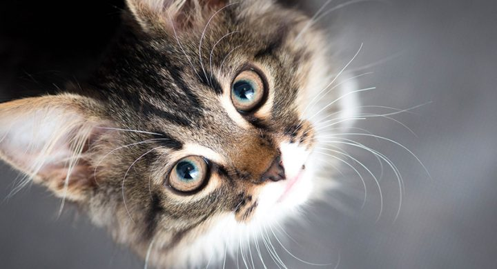Avoir un chat : 7 raisons pour laquelle avoir un chat est bon pour la santé