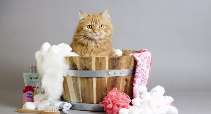 Bain pour chat : laver son chat sans problème