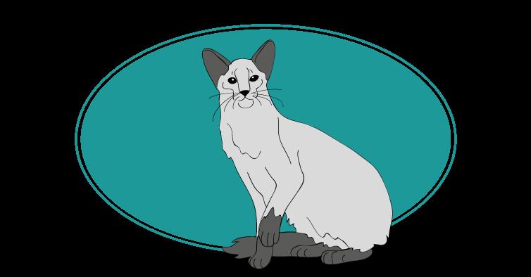Le Balinais chat animal races : tout savoir sur les chats