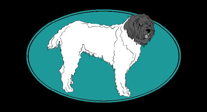 Barbu tchèque : toutes les races de chien, chien races