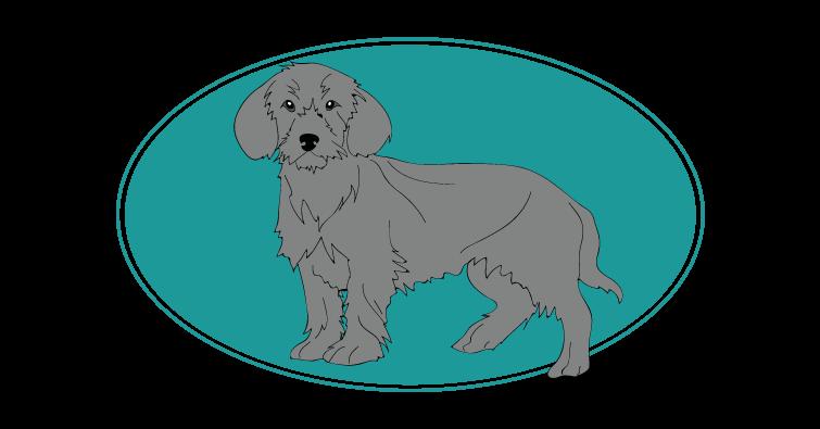 basset-fauve-de-bretagne-assuropoil