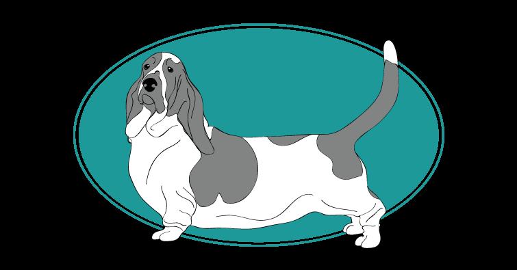 basset-hound-assuropoil