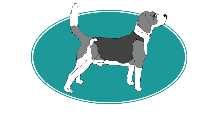 beagle-harrier-assuropoil