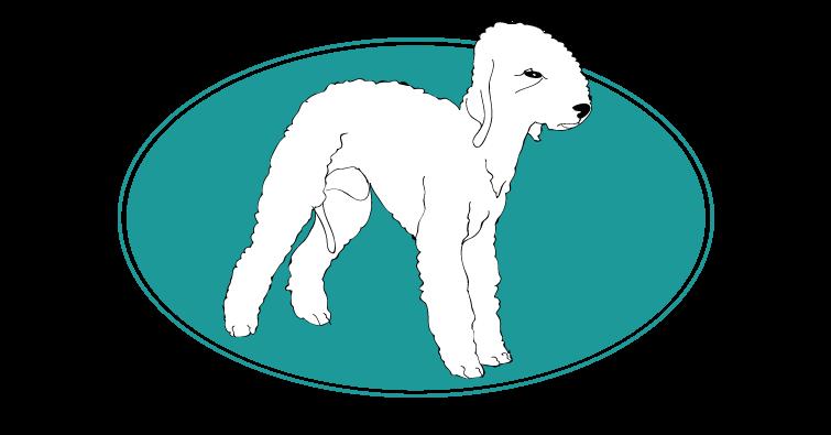 bedlington-terrier-assuropoil