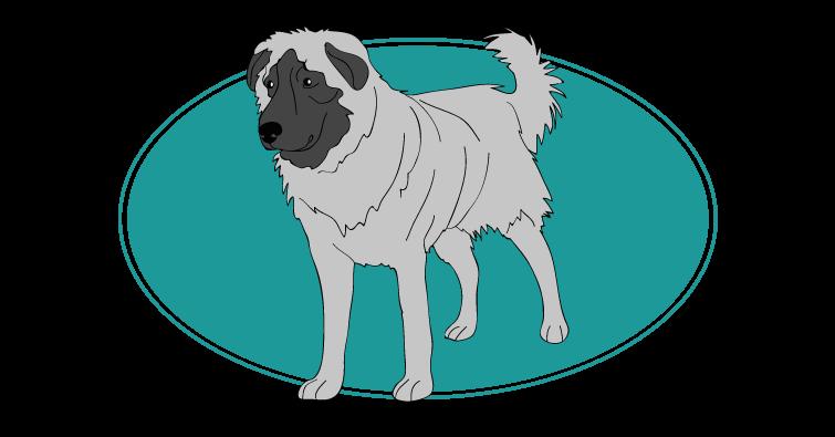 Berger de l'atlas : Toutes les races de chien, chien races