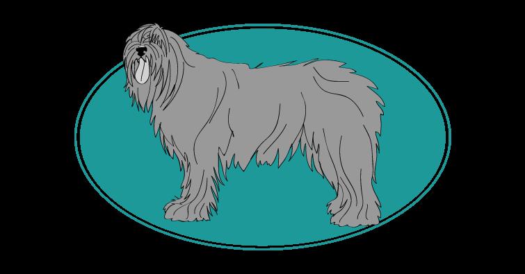 berger-de-russie-meridionale-assuropoil