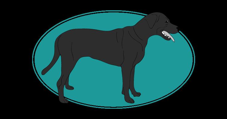 berger-espagnol-de-majorque-assuropoil
