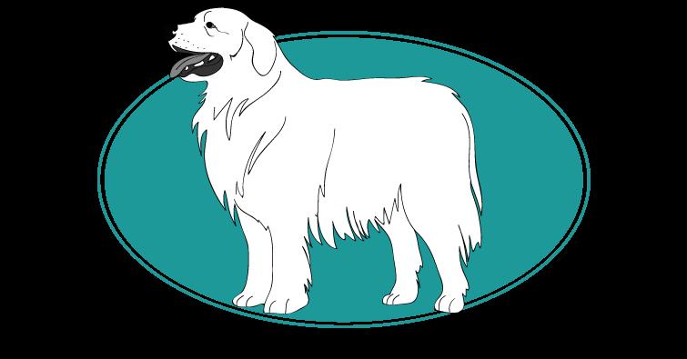 berger-polonais-de-podhale-assuropoil