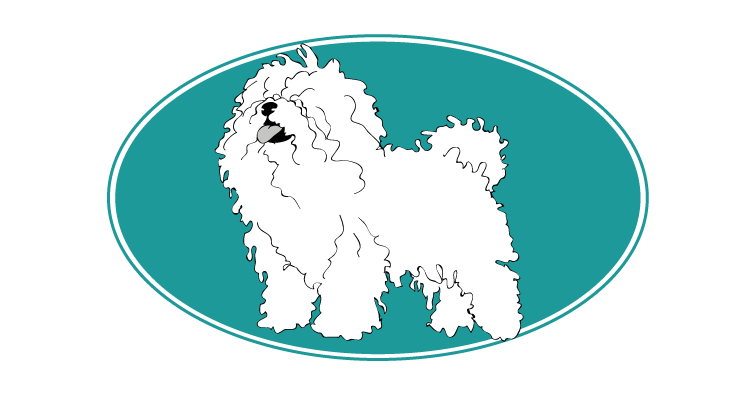 bichon-bolonais-assuropoil
