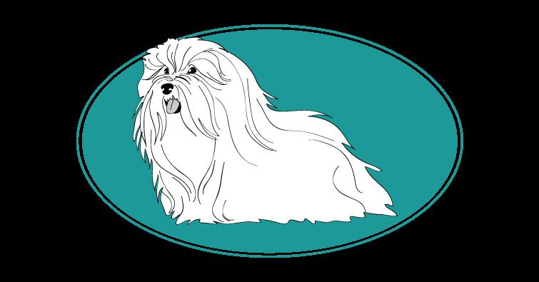 bichon-havanais-assuropoil