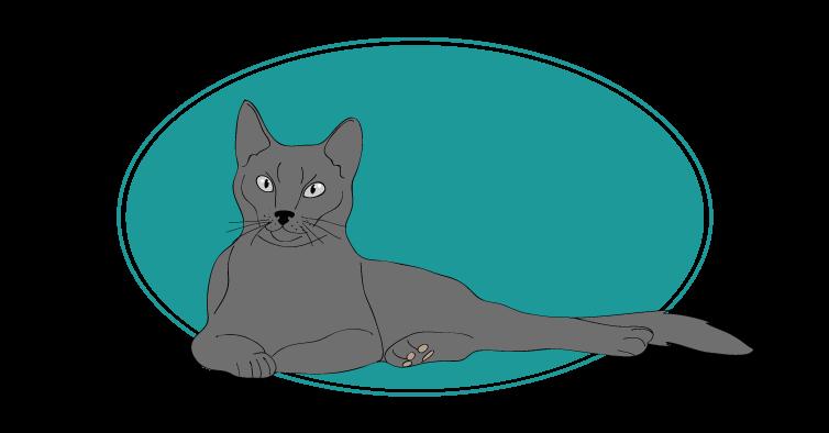 Bleu Russe chat animal races : tout savoir sur les chats