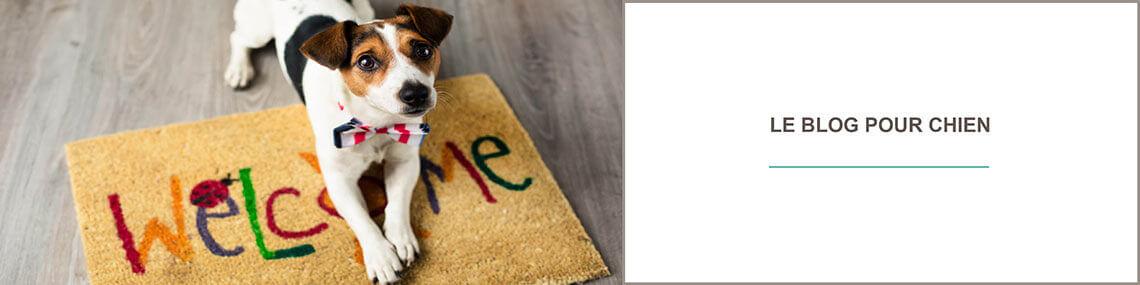 Blog chien : comprendre son chien, comportement du chien
