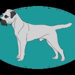 Border Terrier : toutes les races de chien, chien races