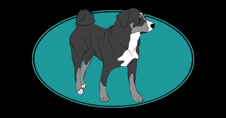 bouvier-appenzell-assuropoil