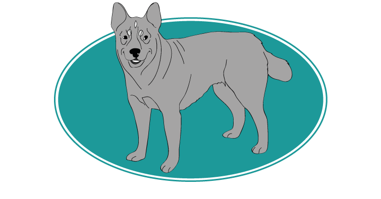 Bouvier australien : toutes les races de chien, chien races