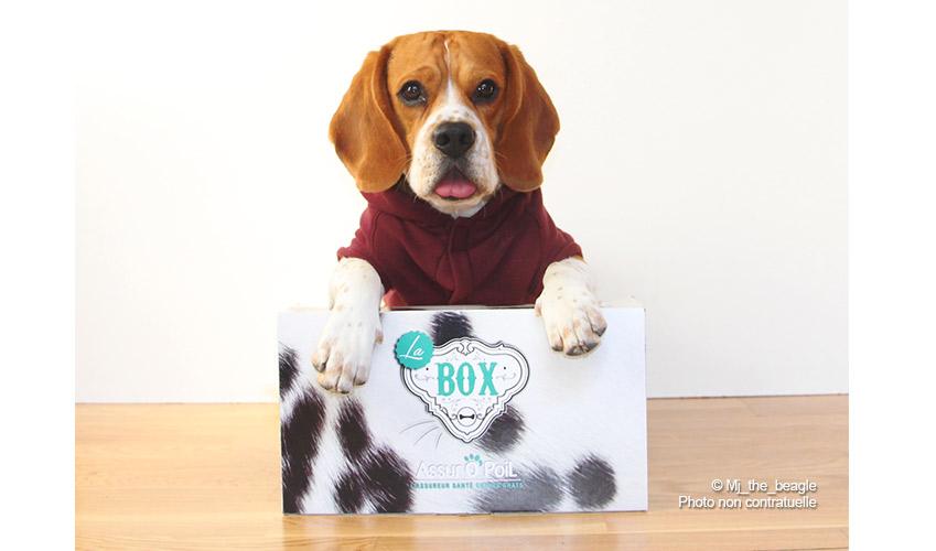 box animaux : Offre nouvel adhérent chien chat