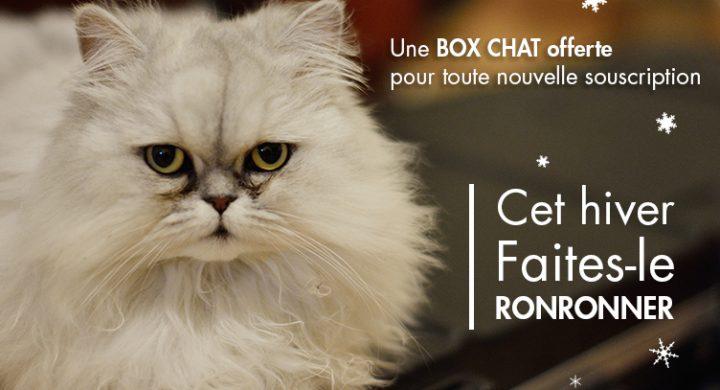 Article box chat, assurance pour chat