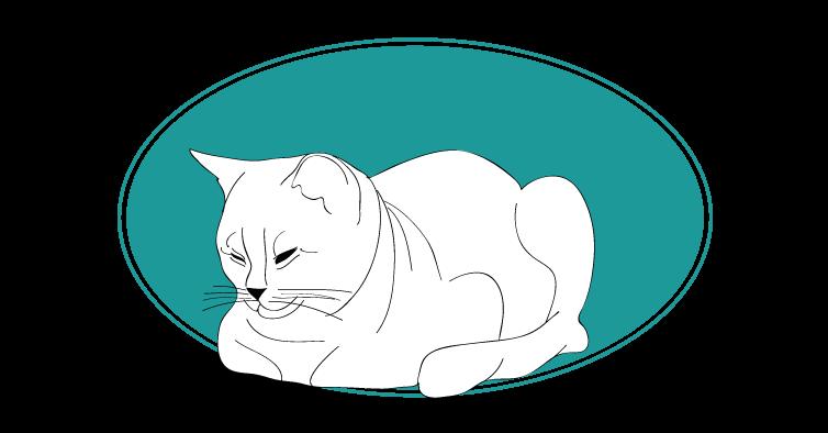 British shorthair chat animal races : tout savoir sur les chats