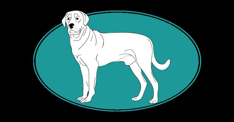 Broholmer : toutes les races de chien, chien races