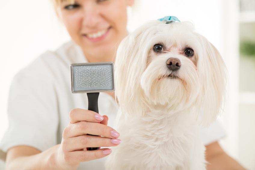 Brossage des poils de votre chien pour son bien-être