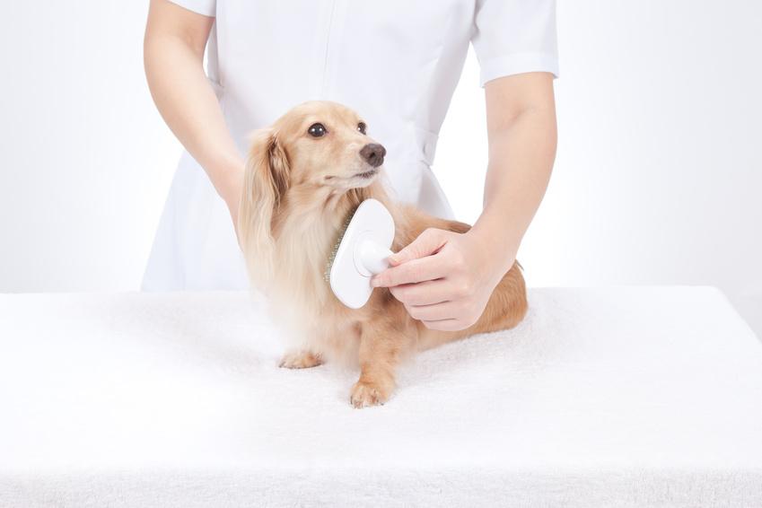 Comment brosser son chien : Bien-être