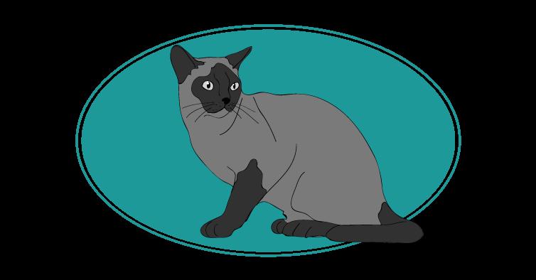 Burmese chat animal races : tout savoir sur les chats