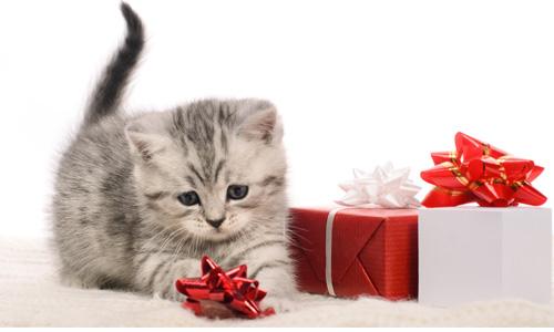 Cadeau de Noel pour chat : Idées cadeaux pour chat