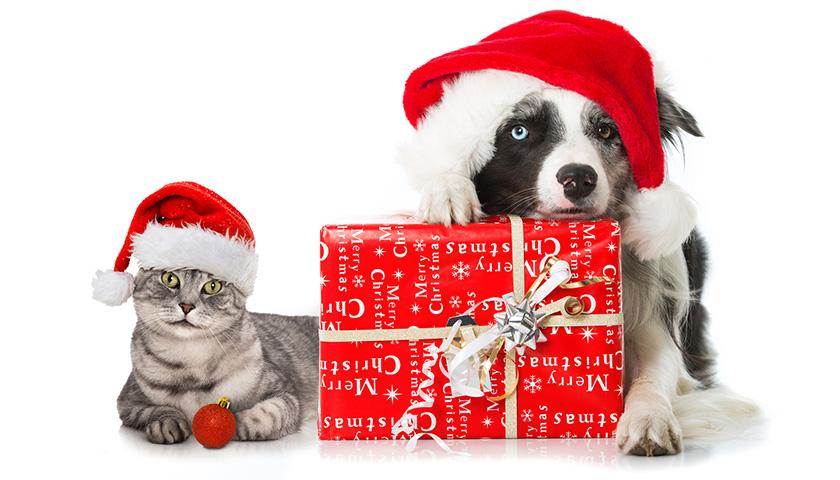 Cadeau de Noel pour chien, cadeau de Noel pour chat, 6 idées de cadeau à offrir à nos chien et chat