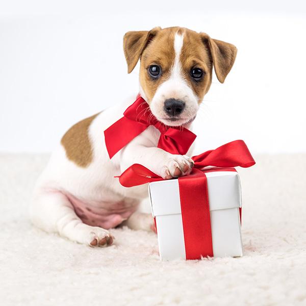 Cadeau de Noel pour chien : Idées de cadeau pour chien et chat