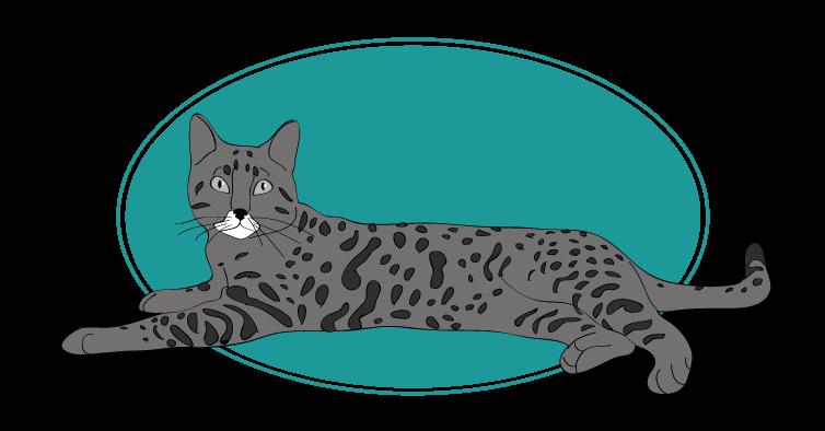 California Spangled chat animal races : tout savoir sur les chats