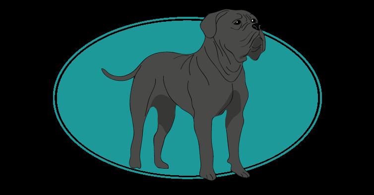cane-corso-assuropoil