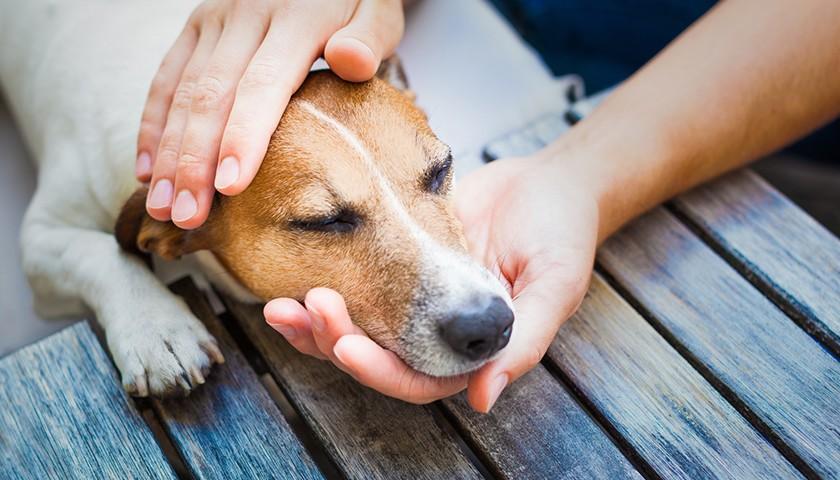 Caresser un chien : les bons geste à adopter pour lui faire du bien