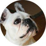 Carte cadeau Assur O'Poil : assurance chien