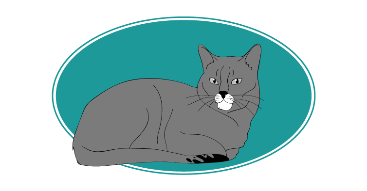 Ceylan chat animal races : tout savoir sur les chats