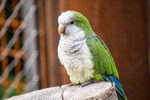 Chaleur et animaux : les oiseaux et la chaleur
