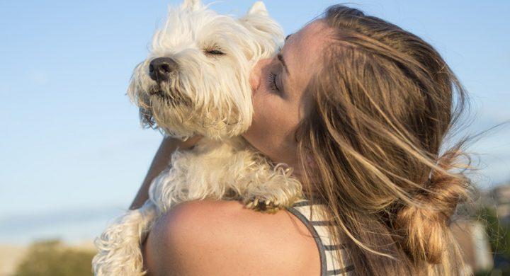 Ete et animaux : 7 conseils pour affronter la chaleur