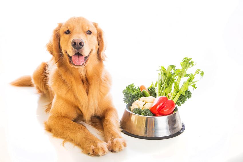 Est ce bien pour son chien d'être végétarien : Alimentation