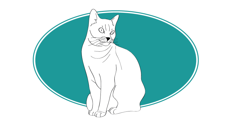 chartreux chat animals races : tout savoir sur les chats