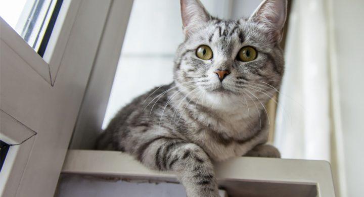 Chat à la maison : Quel danger domestiques