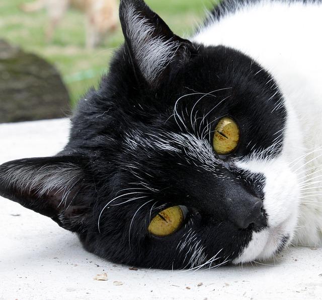 """Résultat de recherche d'images pour """"chat senior"""""""