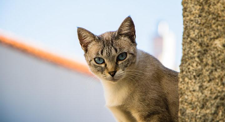 Chat autiste : Comment reconnaitre l'autisme chez le chat ?