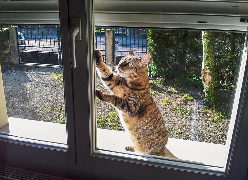 Faire sortir son chat : Accident