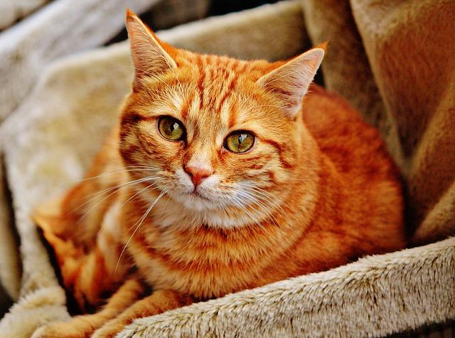 Psychologie-de-chat : Les chat ont-ils des emotions