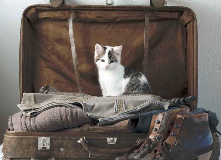 Chat en vacances : Comment préparer son chat à partir en vacances